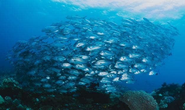 14 Objetivo: Vida submarina